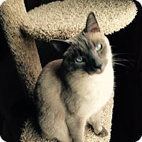 Adopt A Pet :: Spock - Cincinnati, OH