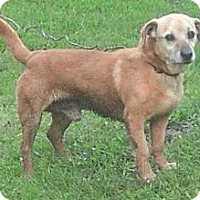 Beagle Mix Dog for adoption in Princeton, West Virginia - Fred
