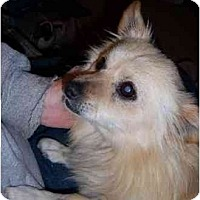 Adopt A Pet :: Britney - Templeton, CA