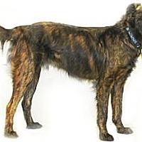 Adopt A Pet :: Dodge - Inverness, FL