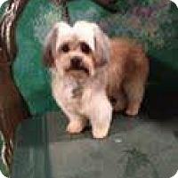 Adopt A Pet :: Charlie - Goleta, CA