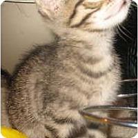 Adopt A Pet :: Kiki - Acme, PA