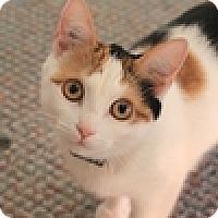 Adopt A Pet :: Porscha - Vancouver, BC