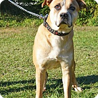Adopt A Pet :: Bolt - Fort Valley, GA