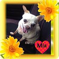 Adopt A Pet :: MIA - Pacific Palisades, CA