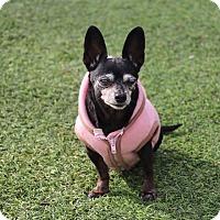 Adopt A Pet :: Lucy - Creston, CA