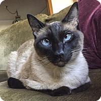 Adopt A Pet :: Hayden - Oakland, CA