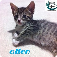 Adopt A Pet :: Allen - Friendly Boy! - Huntsville, ON