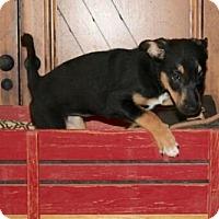 Adopt A Pet :: Haley - Surprise, AZ