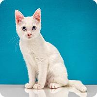 Adopt A Pet :: Luna - Chandler, AZ