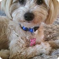 Adopt A Pet :: Cleo - Thousand Oaks, CA