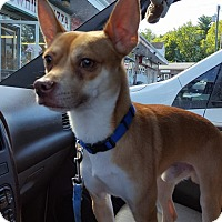 Adopt A Pet :: Kane - Waterbury, CT