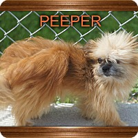 Adopt A Pet :: PEEPER - Port Clinton, OH