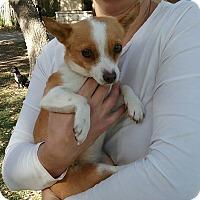 Adopt A Pet :: Anais - Boerne, TX