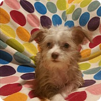 Adopt A Pet :: Bernie - La Verne, CA