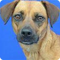 Adopt A Pet :: RITA - LAFAYETTE, LA