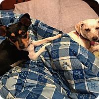 Adopt A Pet :: Peggy Sue - Chicago, IL