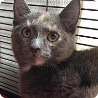 Adopt A Pet :: Gidget - Breinigsville, PA
