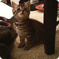 Adopt A Pet :: Tigger - Kirkwood, DE