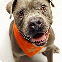 Adopt A Pet :: Valentine - Scottsdale, AZ