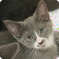 Adopt A Pet :: Liam - Chesterfield Township, MI