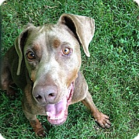 Adopt A Pet :: Doc - New Richmond, OH
