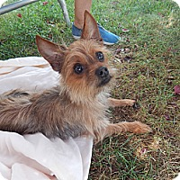 Adopt A Pet :: Timmy - West Deptford, NJ