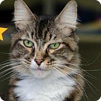 Adopt A Pet :: Symba 13916 - Atlanta, GA