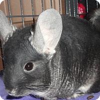 Adopt A Pet :: Homer - Titusville, FL