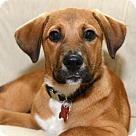 Adopt A Pet :: China - ADOPTION PENDING!