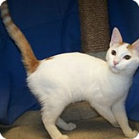 Adopt A Pet :: K-Ts1-Tibbs - Colorado Springs, CO