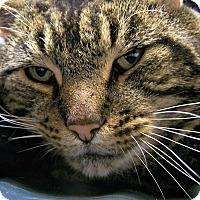 Adopt A Pet :: Sal - Toledo, OH