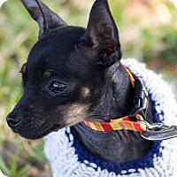 Adopt A Pet :: Jamie - Wharton, TX