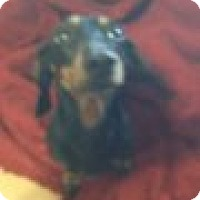Adopt A Pet :: Princess Peaches - Crowley, LA