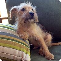 Adopt A Pet :: Watson - Greensboro, GA