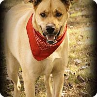 Adopt A Pet :: Thor - Conway, AR