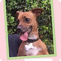 Adopt A Pet :: Gabriela - Scottsdale, AZ