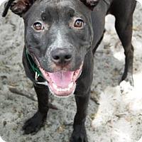 Adopt A Pet :: Nellie - Bradenton, FL