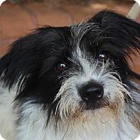 Adopt A Pet :: Dooley - Atlanta, GA