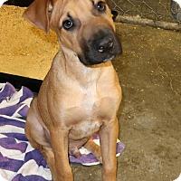 Adopt A Pet :: Titan - New City, NY