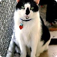 Adopt A Pet :: Pistol Pete - Bradenton, FL