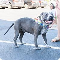 Adopt A Pet :: Sassy - Durham, NC