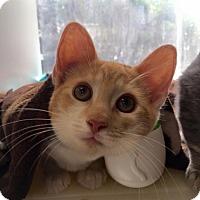 Adopt A Pet :: Romeo - Wantagh, NY