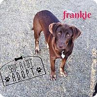 Adopt A Pet :: Frankie - Snyder, TX