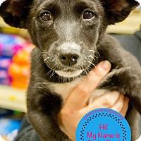 Adopt A Pet :: Slinky Dog - Staten Island, NY