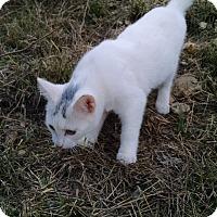 Adopt A Pet :: Elsa - Fischer, TX