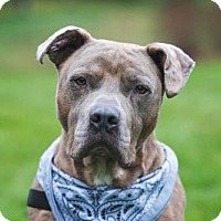 Adopt A Pet :: GOTTI -Sweet Senior begging for a loving home - Bainbridge Island, WA