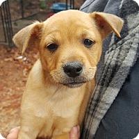 Adopt A Pet :: Bolt - Seabrook, NH