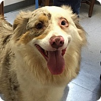 Adopt A Pet :: Bennie - Friendswood, TX