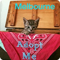 Adopt A Pet :: Melbourne - Lemoore, CA
